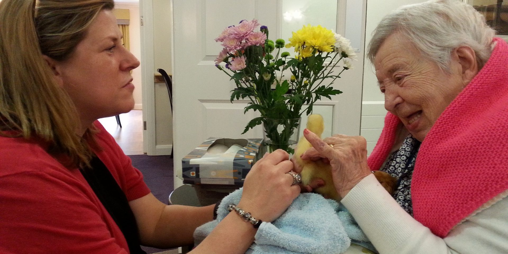 Ducklings at De Lucy House Care Home in Diss